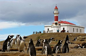 Magallenic Penguins in chile on Isla Magdelana with lighthouse in background