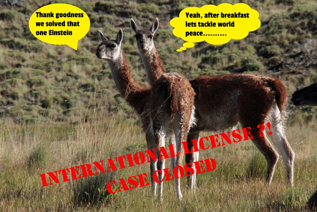 Two guanacos making a joke about solving the problem and next solving world peace